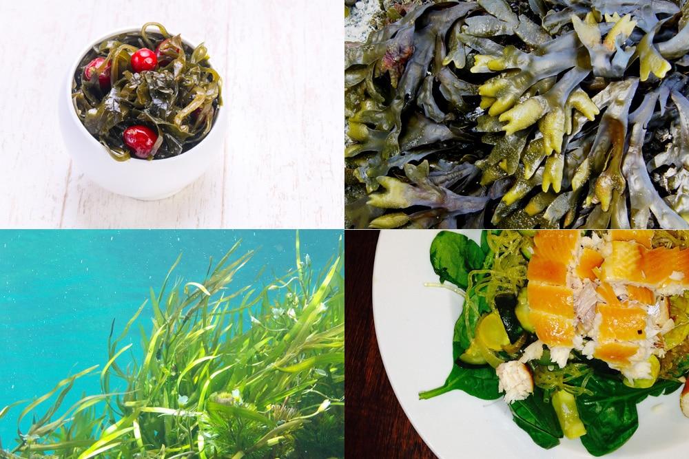Algen als jodhaltige Lebensmittel