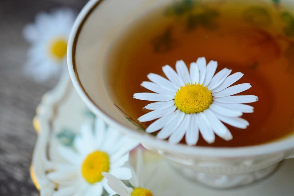 Kamillentee mit Blüten