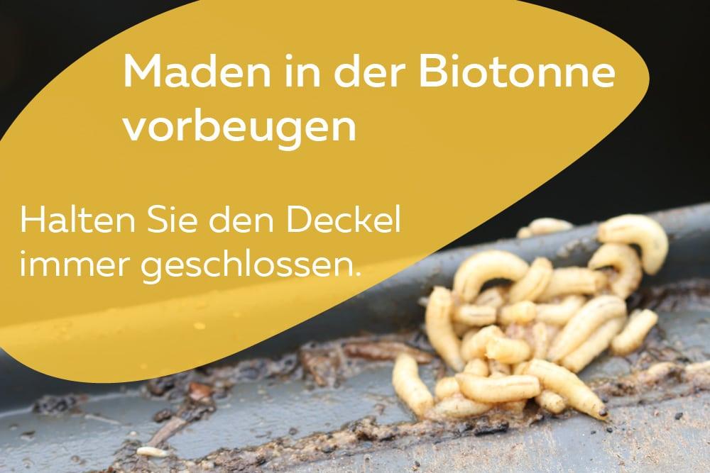 maden in biotonne vernichten