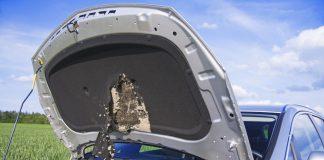 Marderbiss Motorhaube Schaden