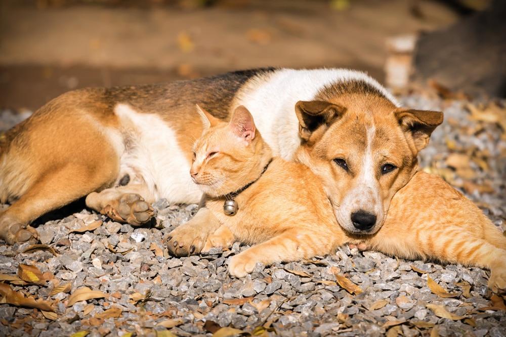 Marderbiss Hund und Katze