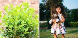 collage aus buchsbaum und kleinem maedchen mit hund
