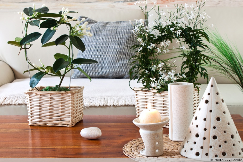 Pflanzen vor Sofa