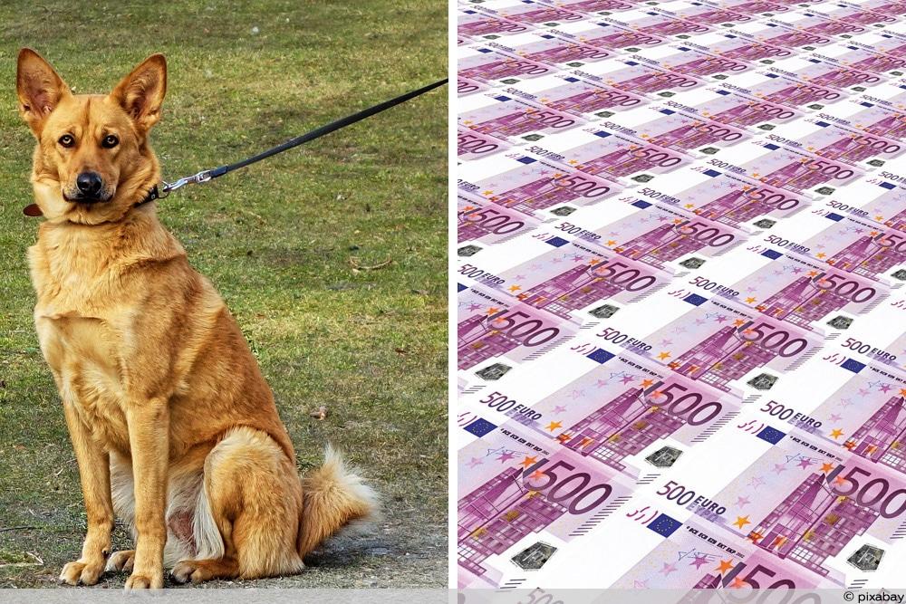 Das ändert sich ab April - Leinenzwang und 500 Euro-Schein