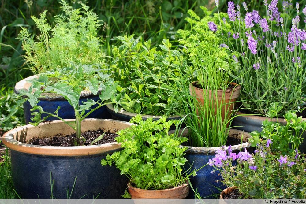 Lavendel in Kombination mit anderen Pflanzen als Wespenabwehr