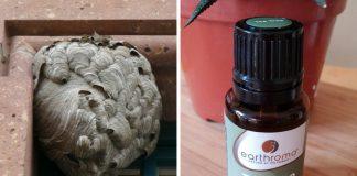 Teebaumöl gegen Wespen - Wespennest und kleine Flasche