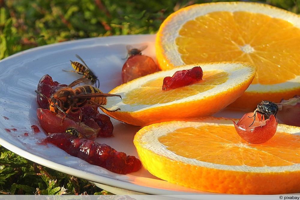 Frisch aufgeschnittenes Obst als Ablenkfütterung