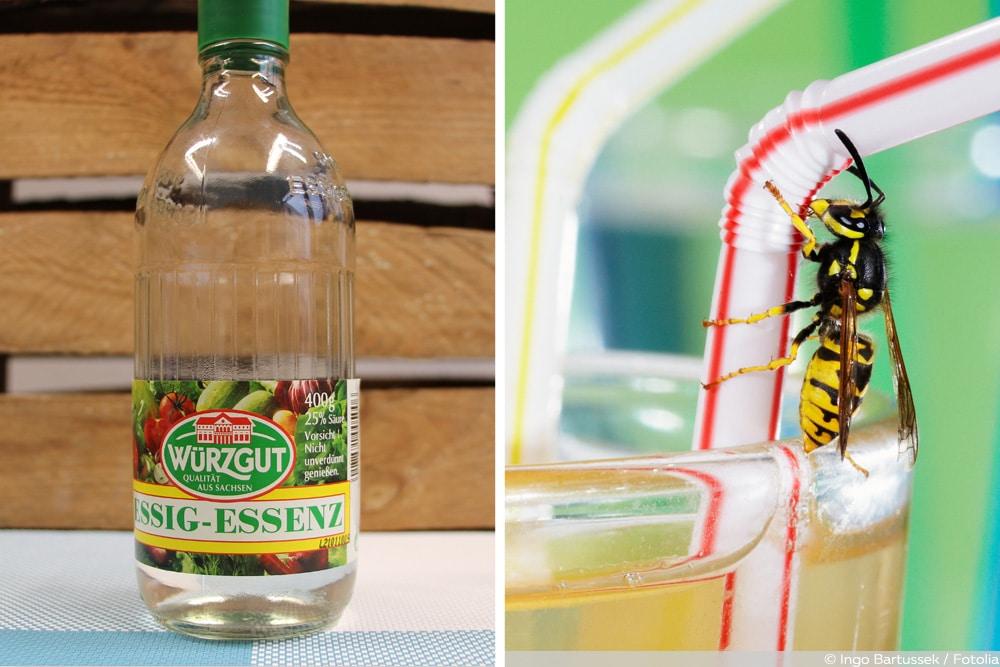 Essig gegen Wespen