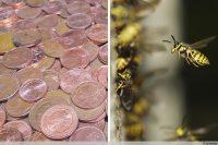 Kupfermünzen gegen Wespen