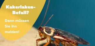 Sind Kakerlaken meldepflichtig