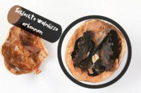 Schlechte Walnüsse erkennen - Walnuss mit Lupe